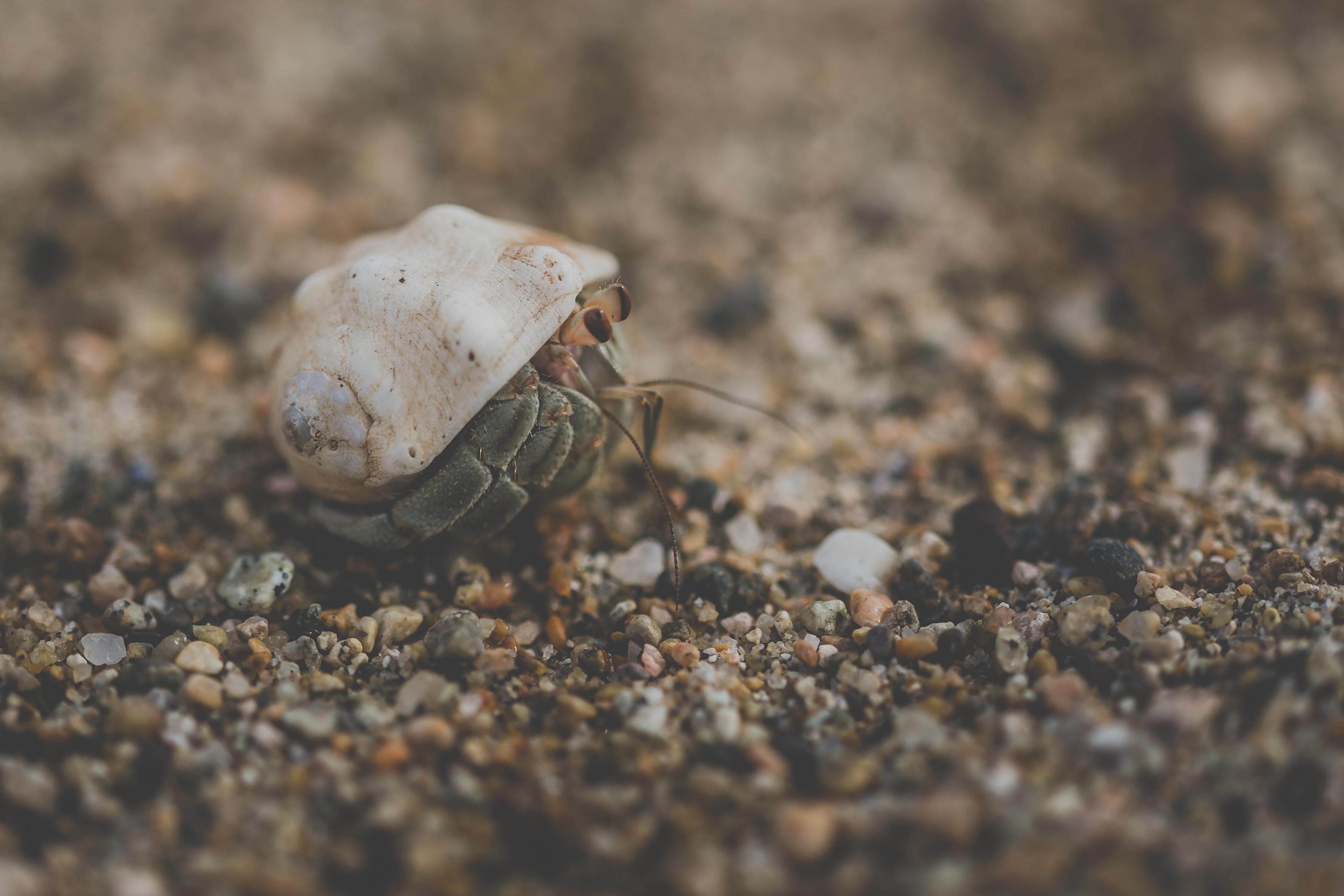 Complete Guide To Hermit Crab Habitats