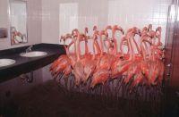 Flamingos in the Washroom  1Funny.com