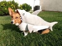 Shark Dog  1Funny.com
