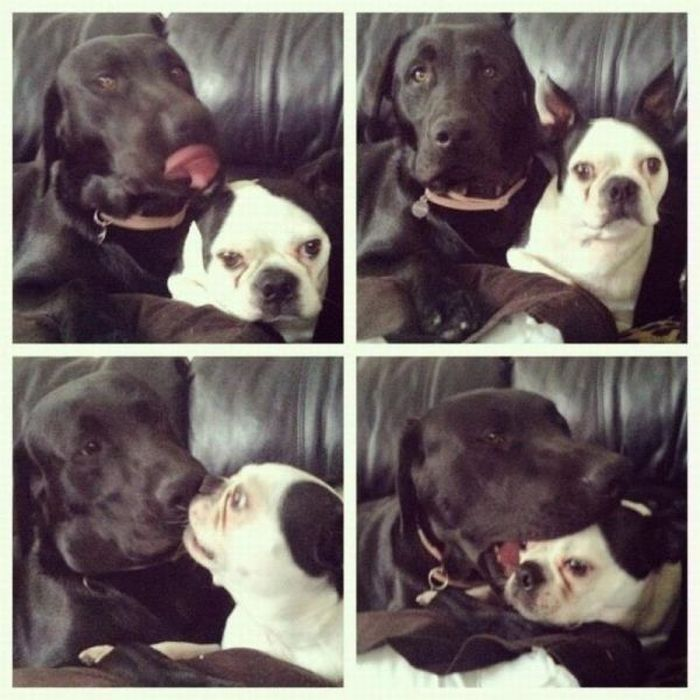 Dog Couple 2  1Funnycom