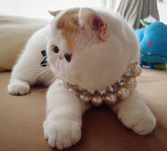 Snoopy the Cat 51 pics  1Funnycom