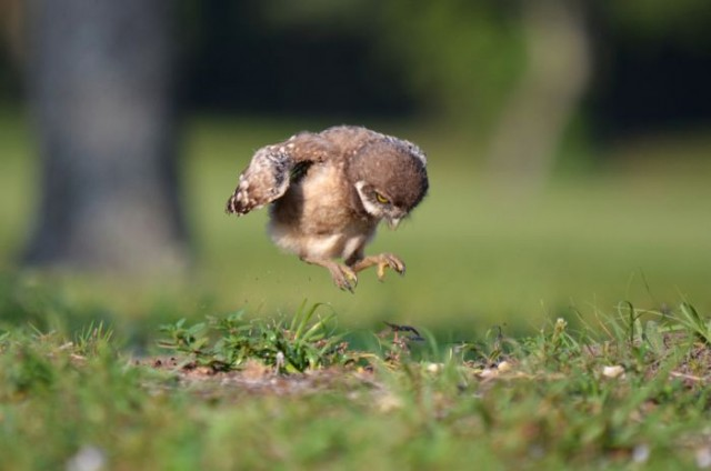 Most Adorable Baby Animals of 2012 45 pics  1Funnycom