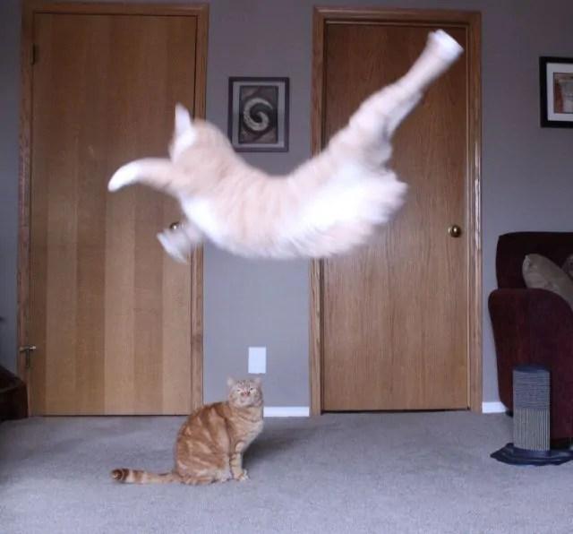 Funny Animals 89 52 pics  1Funnycom