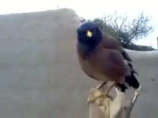 Bird Cries Like a Baby – 1Funny.com