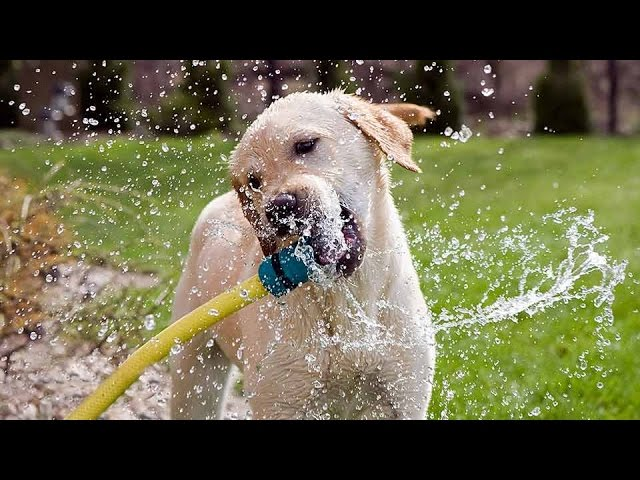 Funny Dogs Playing With Water Compilation  1Funnycom