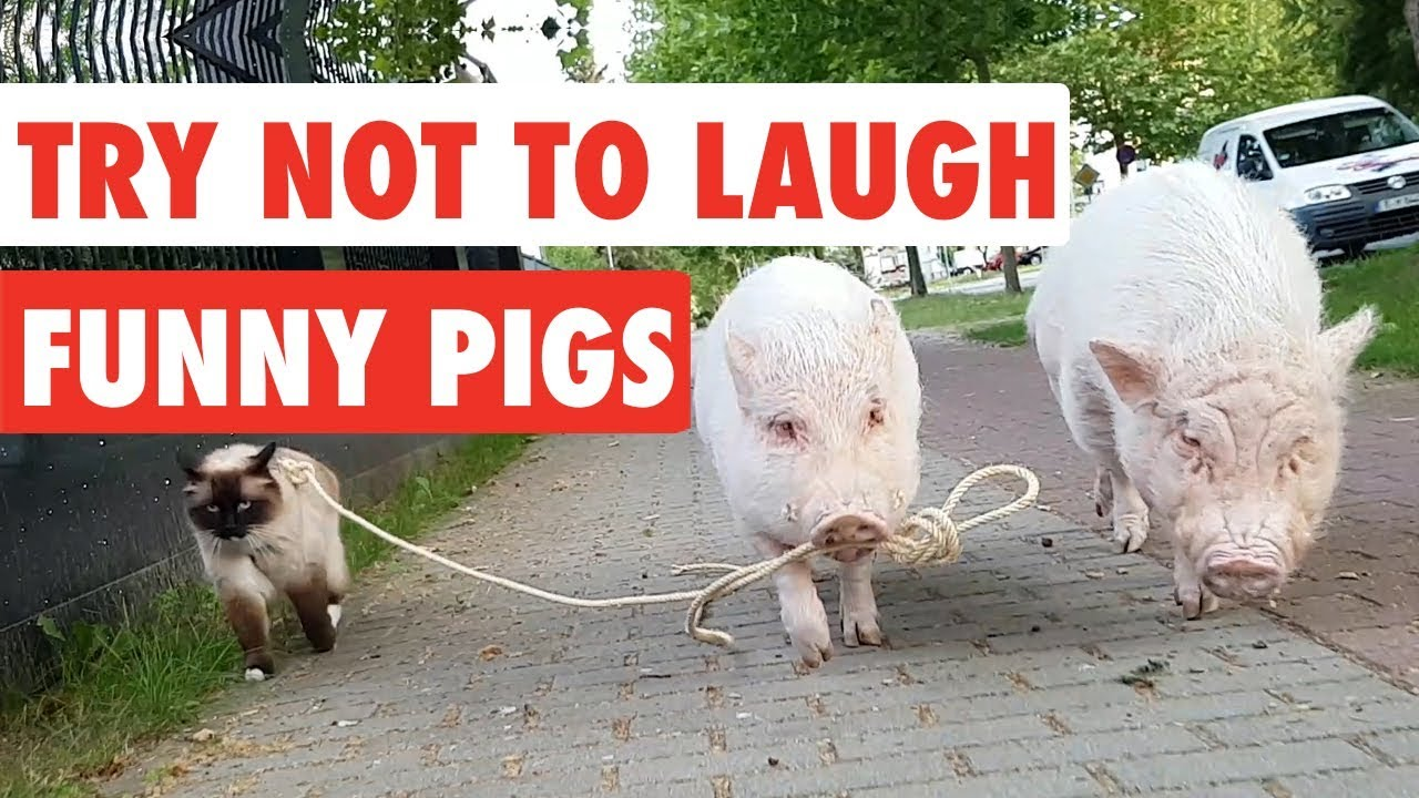 Try Not Laugh Website