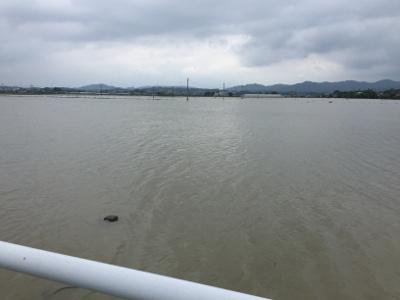 熊本の水没した道路と田んぼ2
