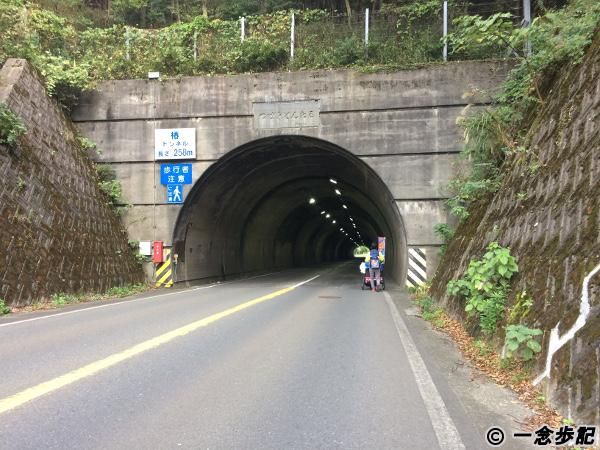 福井県美浜町の椿トンネル