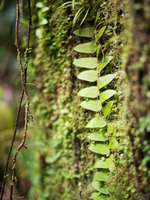 guadeloupe, végétation, forêt, retour d'inspiration