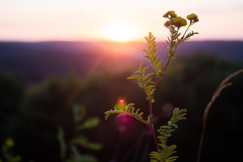 coucher de soleil, alsace