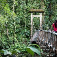 une immersion dans la forêt tropicale