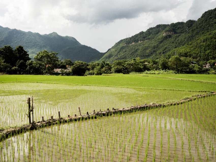 vietnam, ethnies minoritaire, portrait, rizières, mai chau