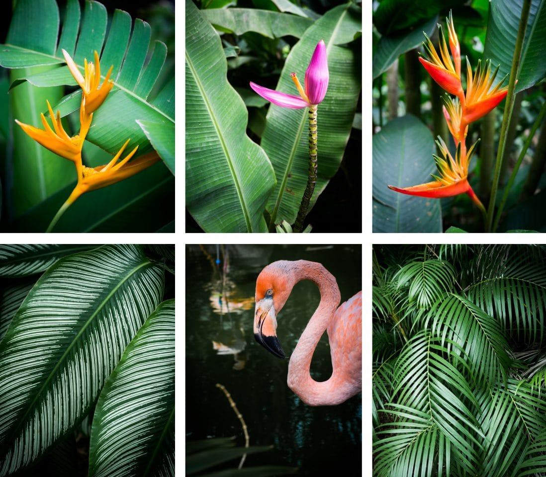 les couleurs du jardin botanique
