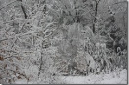 Snow covers the trees in our front yard. This was on April 1st, 2011.