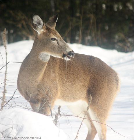 Deer Bite