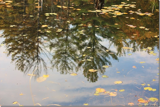 Reflection upside down