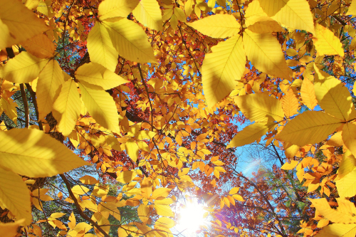 Yellow and the sun