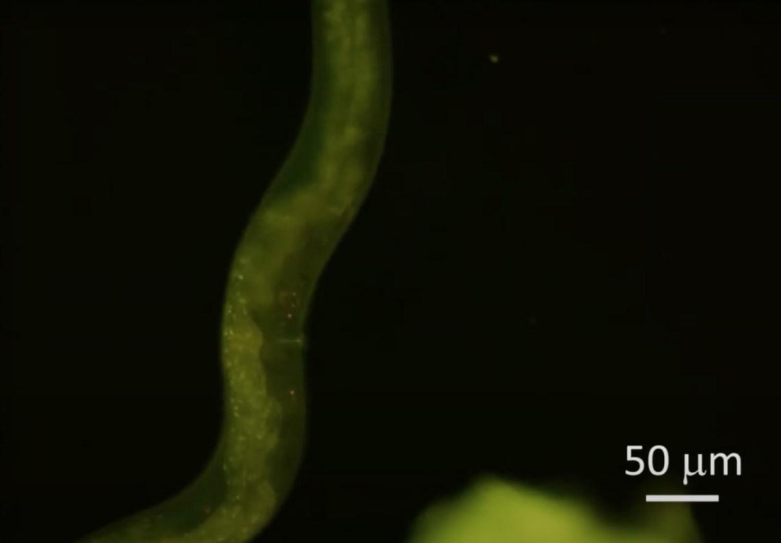 Ученые создали необычный термометр на основе квантового микроскопа, АБЗАЦ