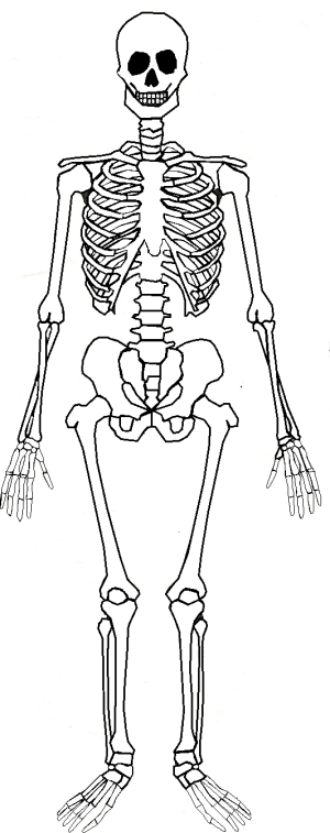 Learning about the Human Skeleton in Forest School