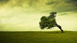 23.Windblown Tree
