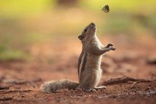 Hái hoa bắt bướm!