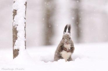 Ôi lạnh quá!