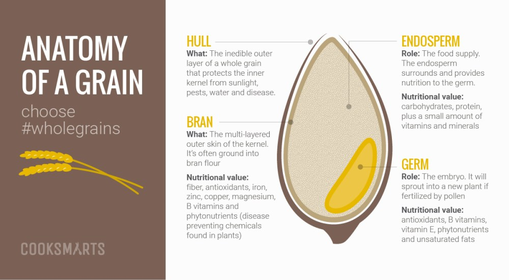 medium resolution of for a better understanding of whole grains let s take a closer look on what makes up a whole grain