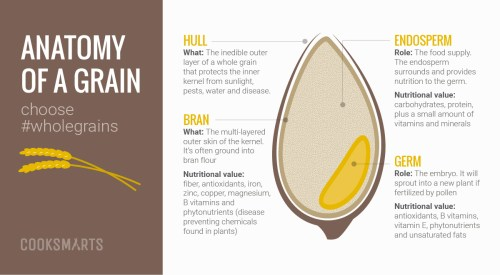 small resolution of for a better understanding of whole grains let s take a closer look on what makes up a whole grain