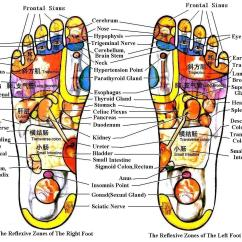 Foot Nerve Endings Diagram Honeywell Wifi Smart Thermostat Wiring The Power Of Reflexology 1mhowto