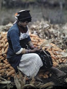 Μία κοπέλα ξεφλουδίζει καλαμπόκια στο δρόμο Κοζάνης-Θεσσαλονίκης