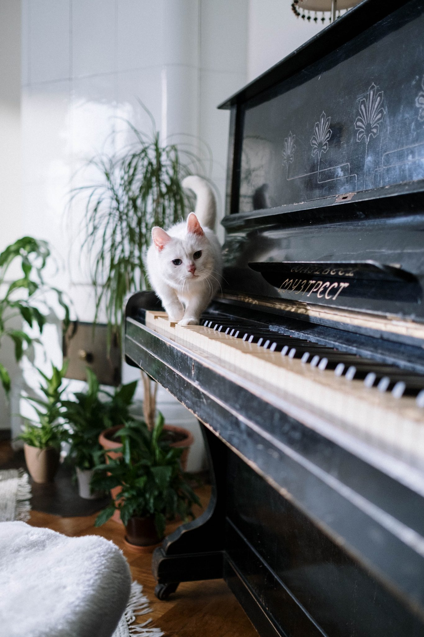 chat marchant sur le clavier d'un piano