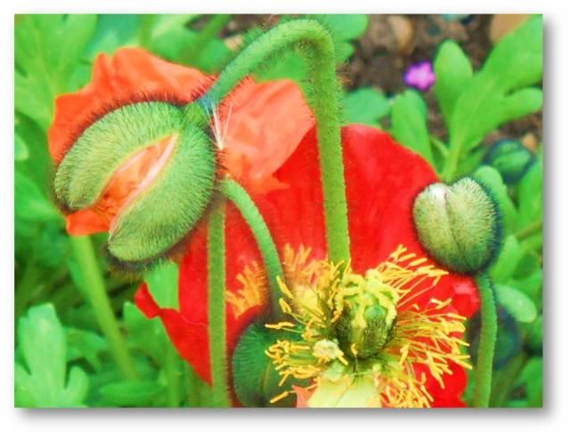 1 Picture 1 Word Flower Birth
