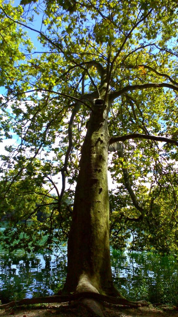 Tree Passion