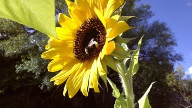 Bumblebee Area