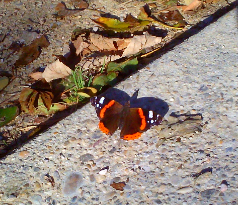 1 Picture 1 Word Urban Butterfly