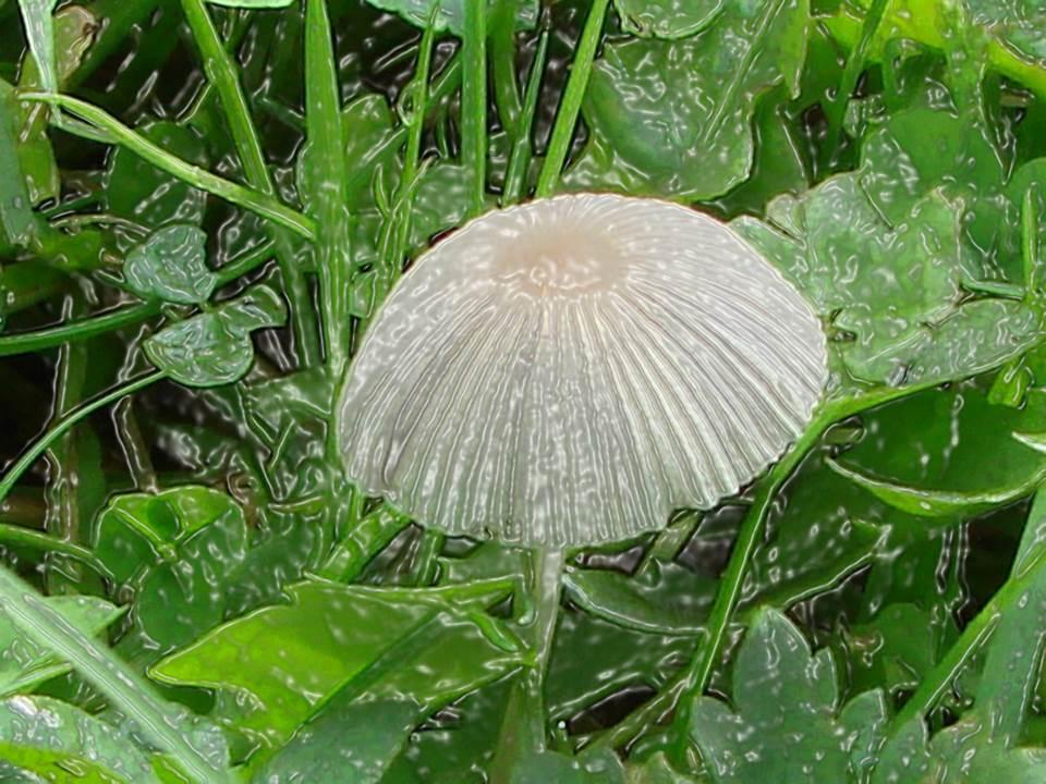 Natural Umbrella