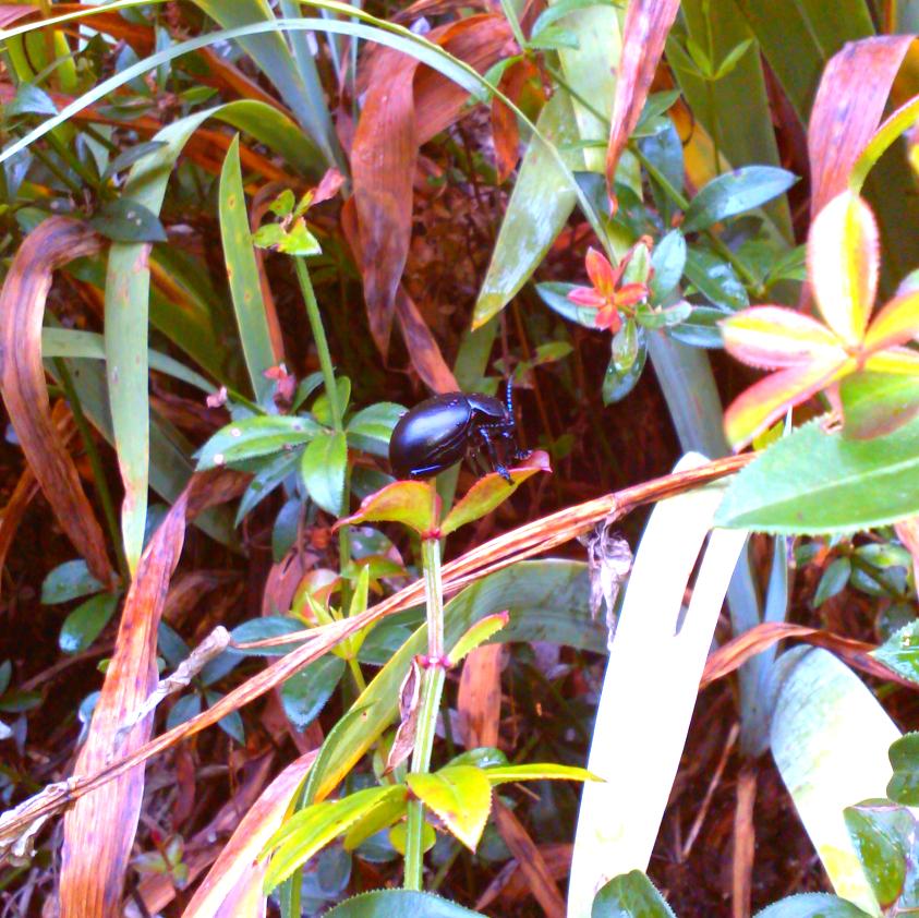 Beetle Life