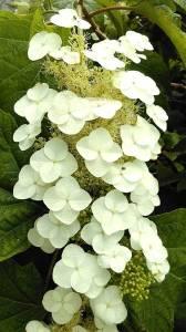 Flower tender
