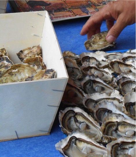 Oysters Lovers
