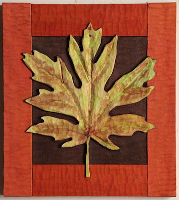 Big Leaf Maple 1