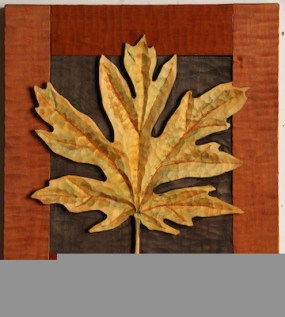 Big Leaf Maple 7