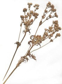 BotanicalsForPrinting14