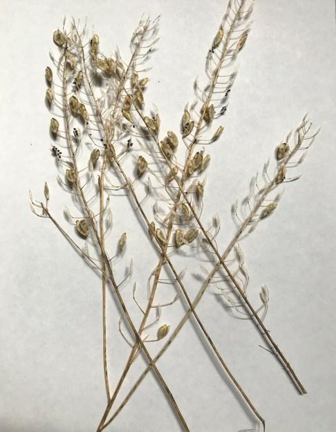 BotanicalsForPrinting20