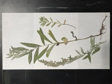 BotanicalsForPrinting3