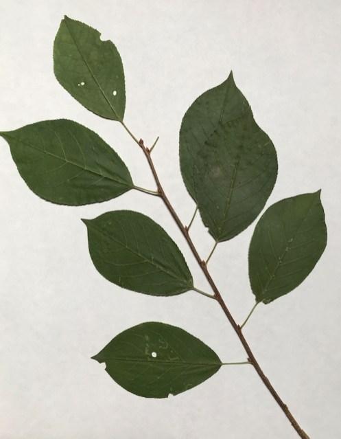 BotanicalsForPrinting7