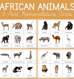 African Animals Montessori Printables – FREE 3 Part Cards - 1+1+1\u003d1 [ 2000 x 2000 Pixel ]