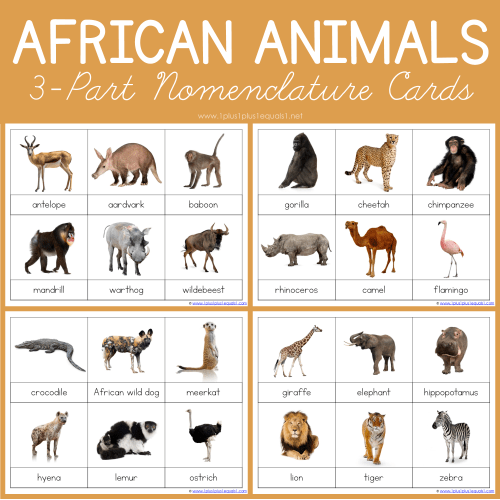 small resolution of African Animals Montessori Printables – FREE 3 Part Cards - 1+1+1\u003d1