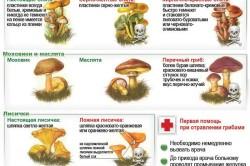 Как проверяют грибы луком. Как проверить грибы на ядовитость: полезные советы