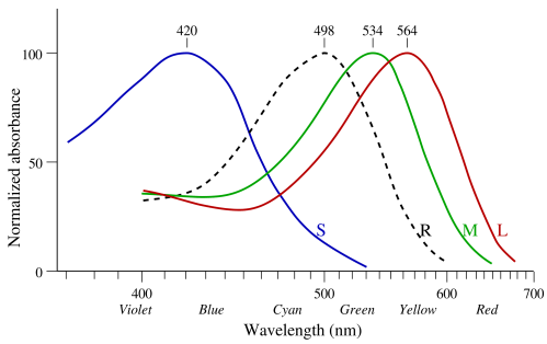 small resolution of absorbance rates of rods and cones