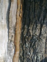 wood-maple